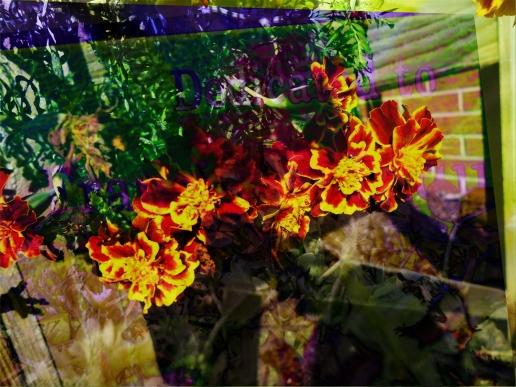 jones.adriana rainbow clash 2