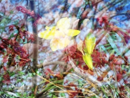 junker.sam flowers 2